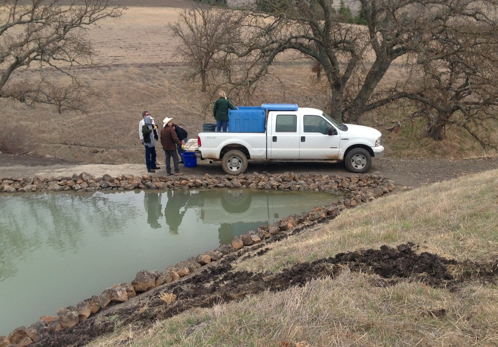 Stocking a Pond in Northern California